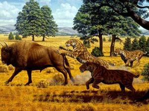 smilodon-tigre-chasse