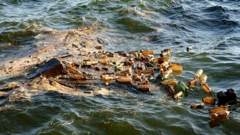 Les animaux marins fuient en masse les eaux polluées