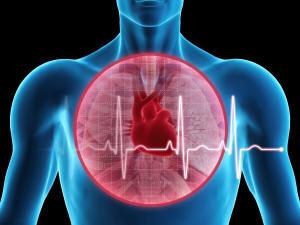 Graphique montrant le coeur dans le corps humain