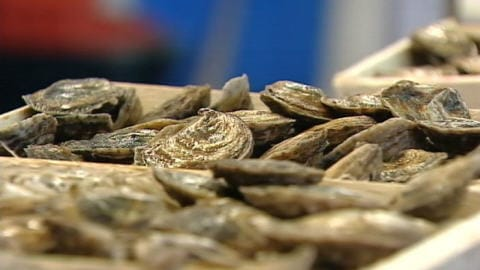 Huîtres : dernières fêtes avant la hausse des prix