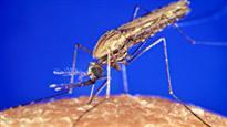 La malaria n'inquiète pas suffisamment les Québécois