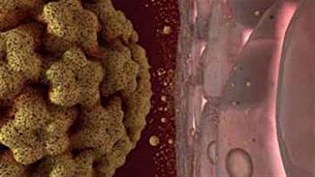 El virus del papiloma humano (VPH)
