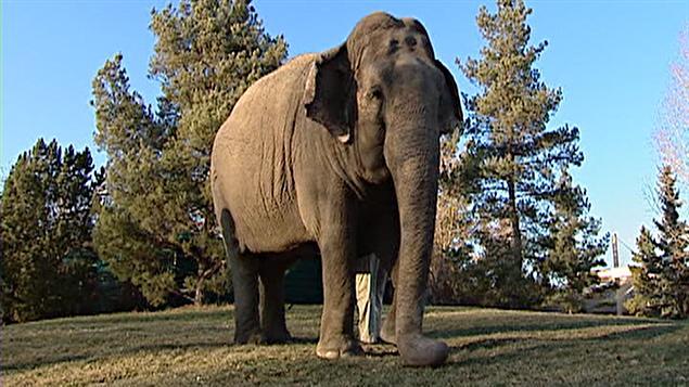 Lucy l'éléphante