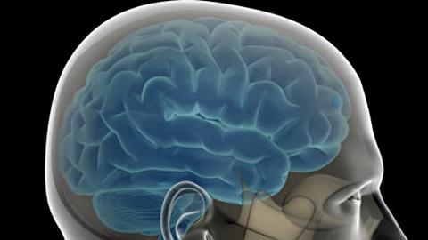 Le cerveau d'un homme