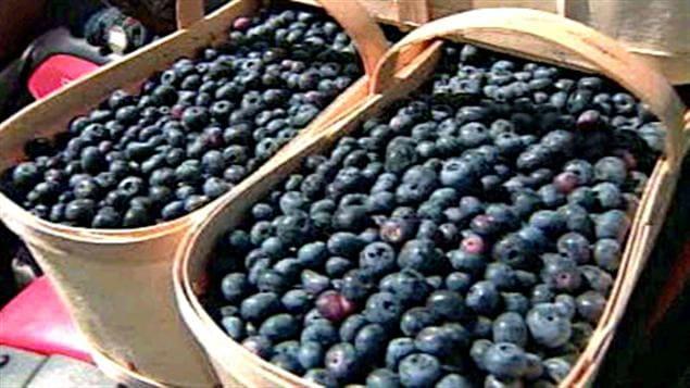 Les exportations du bleuet vers le Japon ont explosé depuis que des études confirment ses effets antioxydants. Les Japonais mangeaient entre 4 et 5 millions de livres de bleuets par année en 1990. Ils en ont consommé 10 fois plus en 2006. Et ils considèrent maintenant ce fruit comme un médicament.