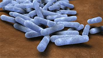Bactéries intestinales