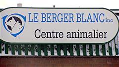 Berger blanc