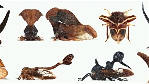 Des insectes avec trois paires d 39 ailes ici radio - Differentes especes de pins ...