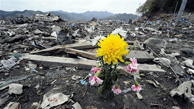 Une fleur au milieu des décombres laissés par le tsunami à Otsuchi, au Japon