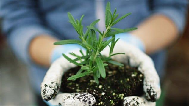 Des suggestions de livres sur l'horticulture