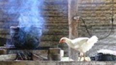 La couverture du livre Les recettes oubliées des Andes vénézuéliennes