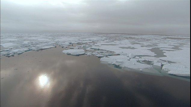 Banquise dans l'océan arctique