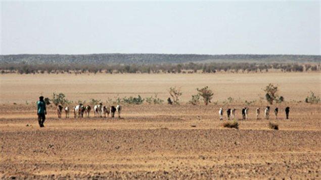 desert touareg niger
