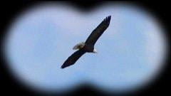 Les routes migratoires des oiseaux sont souvent venteuse, propice à l'installation d'éoliennes.