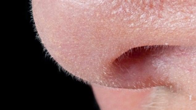 Un nez
