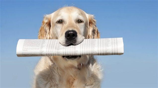 La maltraitance des animaux est dénoncée par l'organisme Last Chance for Animals / © iStock