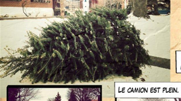 Sur les traces des sapins de Noël…