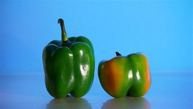 670 millions de tonnes de fruits et légumes sont jetées annuellement dans les pays industrialisés selon  l'Organisation des Nations Unies pour l'Alimentation et l'agriculture.