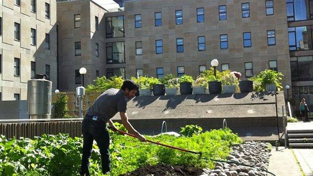 Sur le toit de McGill.