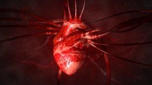 Autopsie du cœur animal et humain