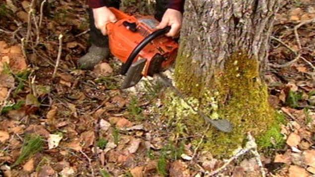Un travailleur forestier