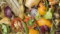 Compost : guide pratique
