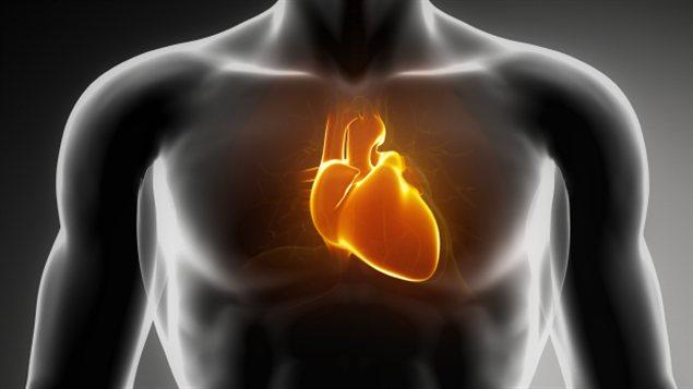 La poitrine et le coeur d'un homme
