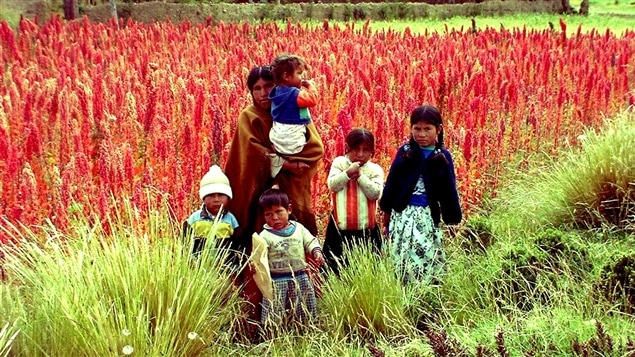 la culture du quinoa en bolivie les cons quences de sa popularit bien dans son assiette. Black Bedroom Furniture Sets. Home Design Ideas