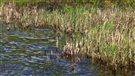 N.-B. : aires de 30 hectares désormais protégées dans la Péninsule acadienne