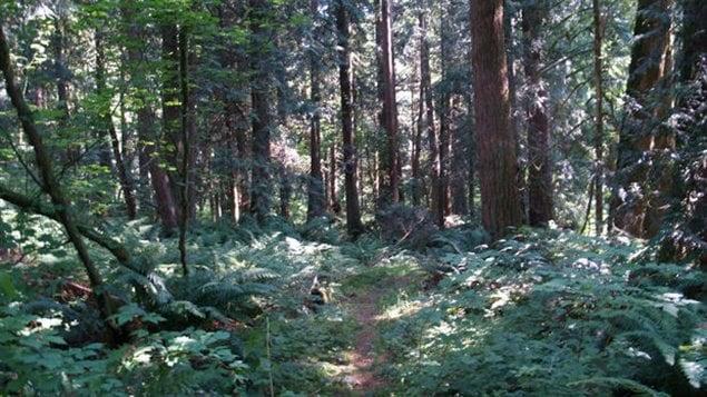 La parcelle de forêt que souhaite vendre le canton de Langley, en Colombie-Britannique
