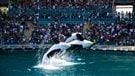 L'Ontario resserre la réglementation des parcs animaliers