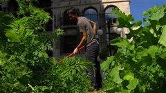 Agriculture urbaine à Montréal.