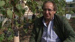 Le propriétaire du vignoble, Tony Carpinteri