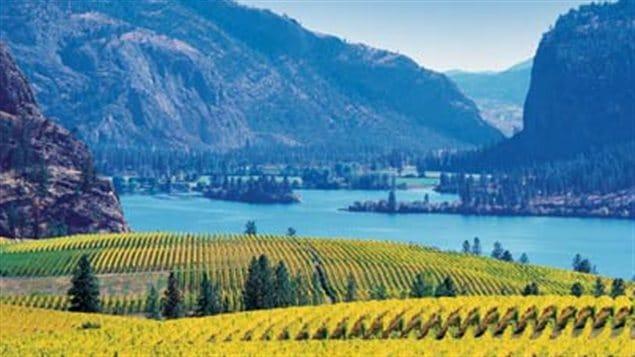 Des vignes dans la vallée de l'Okanagan