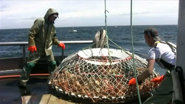 Pêche au crabe