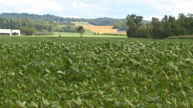 Le Qu�bec a produit huit cent mille tonnes de soya en 2011.