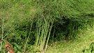 Un légume à admirer l'hiver et à déguster au printemps (2012-11-29)