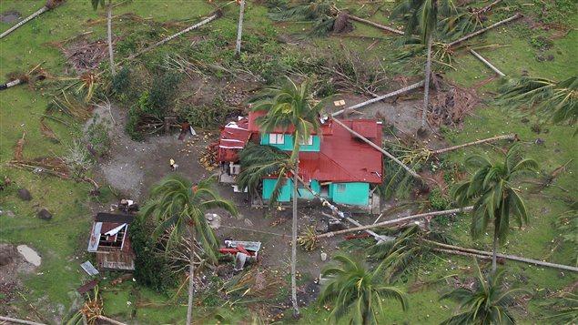 Des cocotiers n'ont pas résisté aux intempéries causées par le typhon Bopha, dans le sud des Philippines.