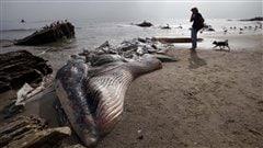 Le cadavre de la baleine