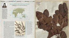 Une partie de <i>L'Herbier des explorateurs</i>, de Florence Thinard