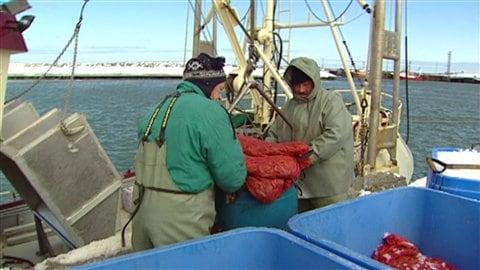 Des pêcheurs de crevettes