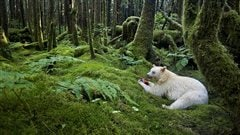  Spirit of the forest   Paul Nicklen (Canada), de l'exposition Wildlife Photographer of the Year 2012 au Royal BC Museum
