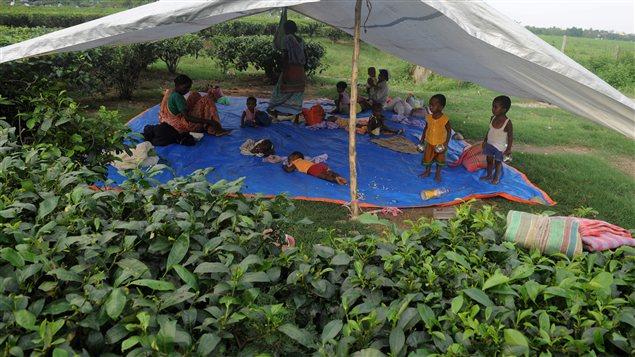 Des enfants de travailleurs indiens attendent sous une tente leurs parents qui travaillent dans un champ de thé.