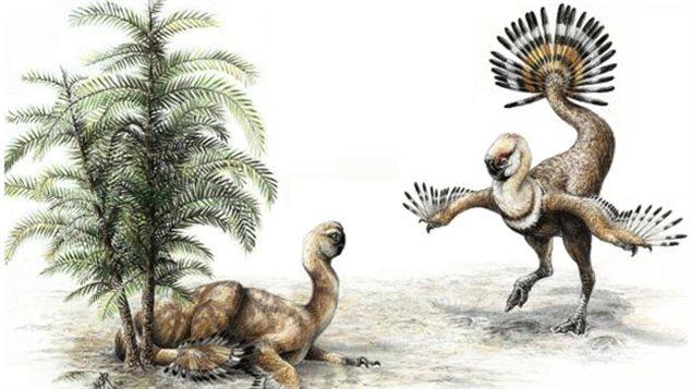Représentation artistique d'un Similicaudipteryx et de sa queue.