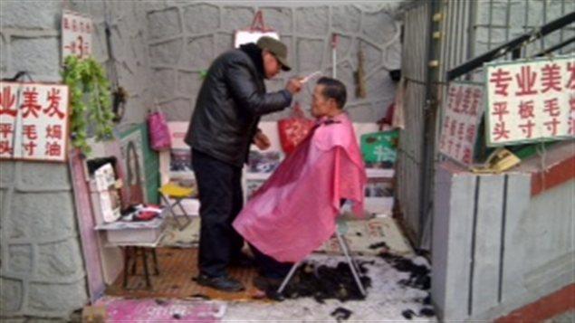 Des Pékinois se faisant couper les cheveux en plein air.