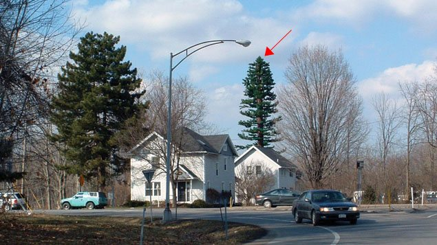 L'arbre à droite, derrière la maison blanche, est en fait une antenne-relais de 27 mètres (90 pieds) à Pittsford, dans l'État de New York.