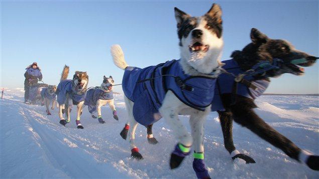 Dans cette photo du 7 février 2012, Misha Pedersen et ses chiens remontent la rivière Yukon gelée, après avoir quitté l'étape de Circle City en Alaska, durant la course internationale de traîneau à chiens Yukon Quest.