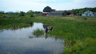 Les rivières de la Montérégie toujours contaminées par les pesticides