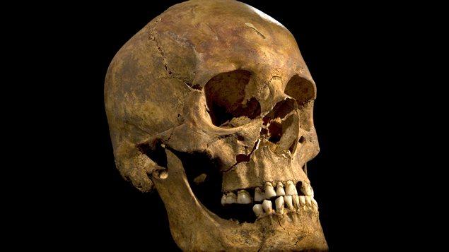 Photo du crâne du squelette retrouvé lors de recherches archéologiques à Leicester, au Royaume-Uni.