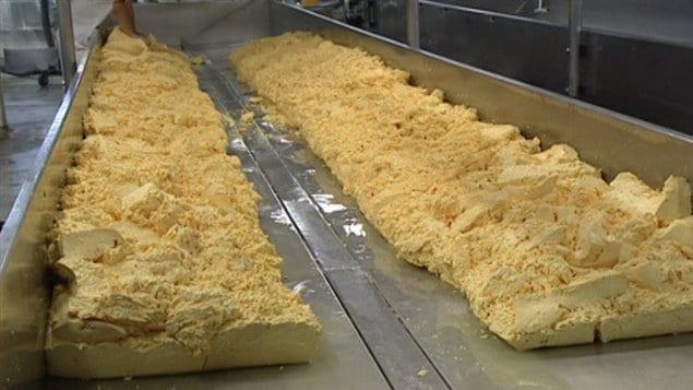Fabrication de fromage dans l'usine de la fromagerie St-Albert